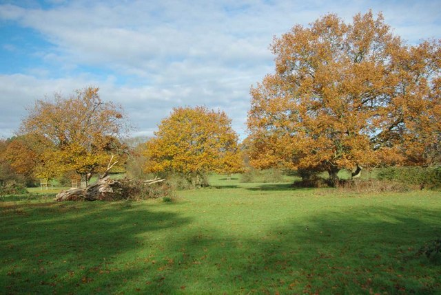 Autumn in Hatfield Forest - geograph.org.uk - 2149449