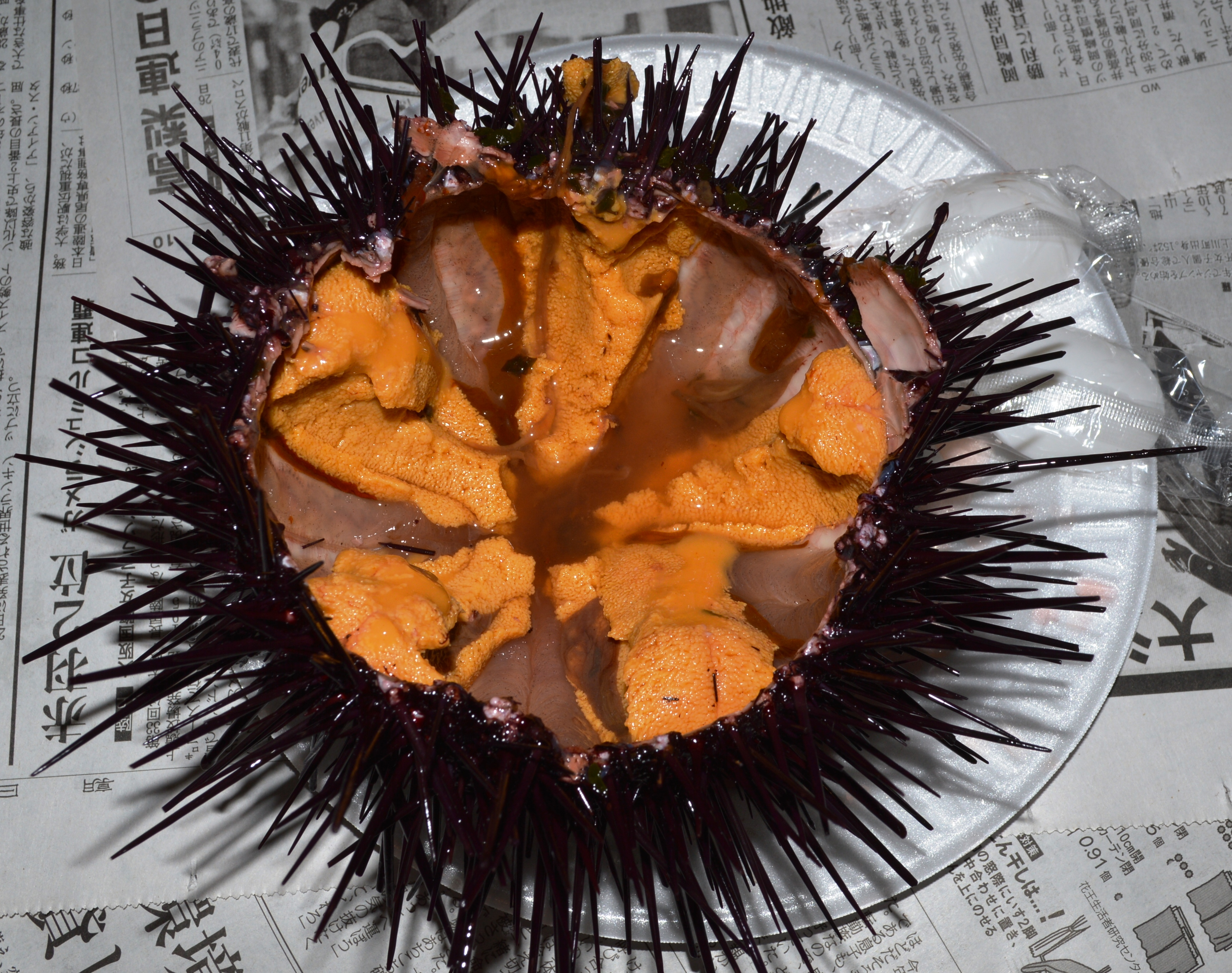 file california sea urchin redondo beach ca 20140215 0172 01 jpg