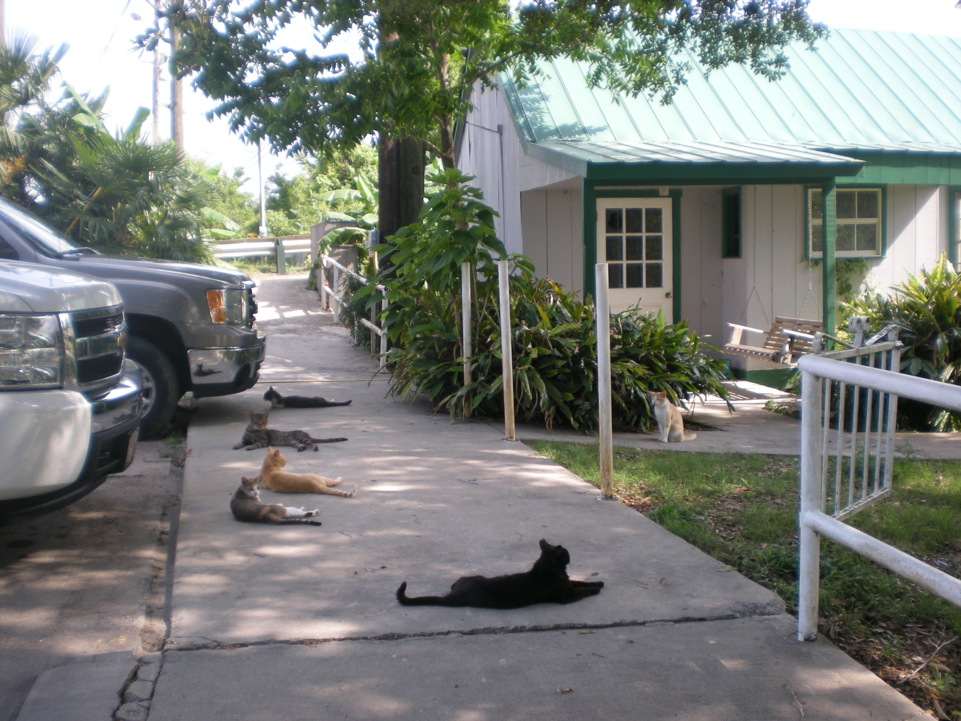 Cats, Cats, and More Cats outside the Seafood Restaurant