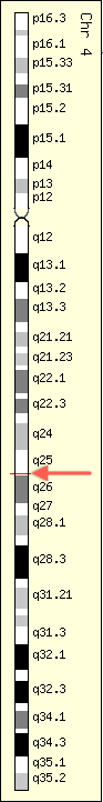 GeneCards展示C4orf21基因的基因组位置:绦带来自Ensembl,而基因位置来自于GenLoc。红色的绦带为C4orf21基因的位置,红箭头使该绦带更加醒目