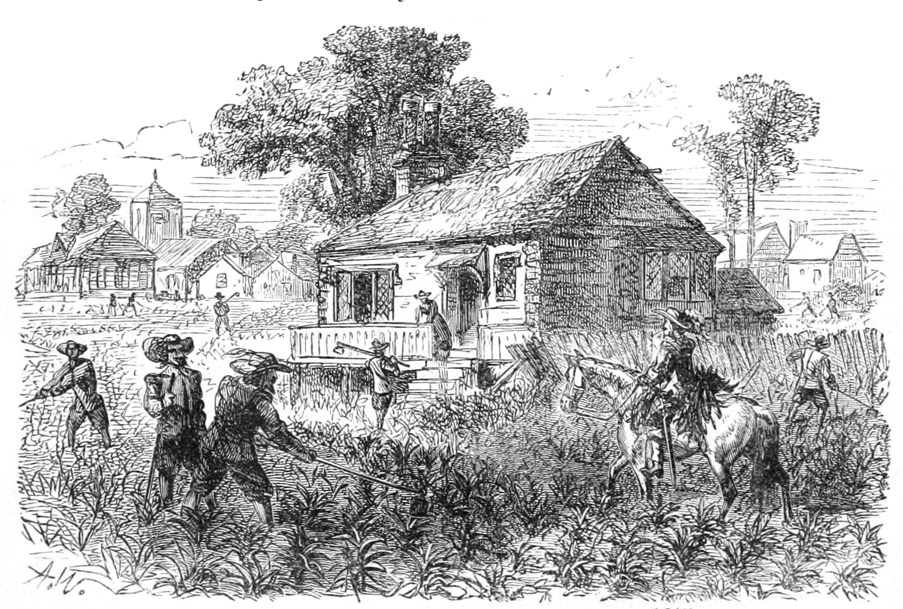 File:Cultivation of tobacco at Jamestown 1615.jpg