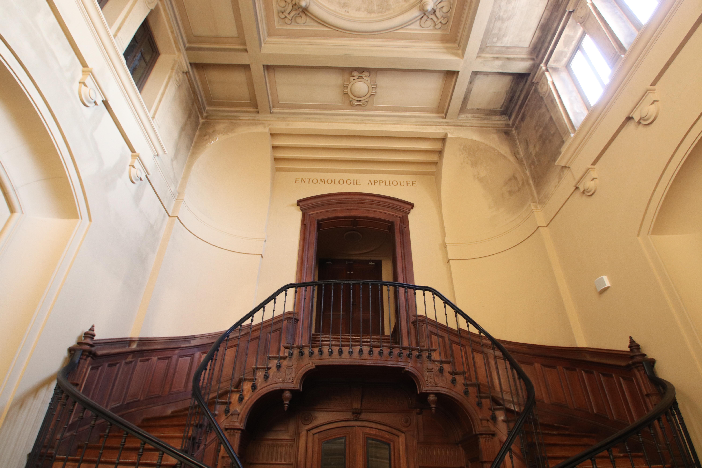 File:Escalier nord de la Grande galerie de l\'Évolution dans le ...