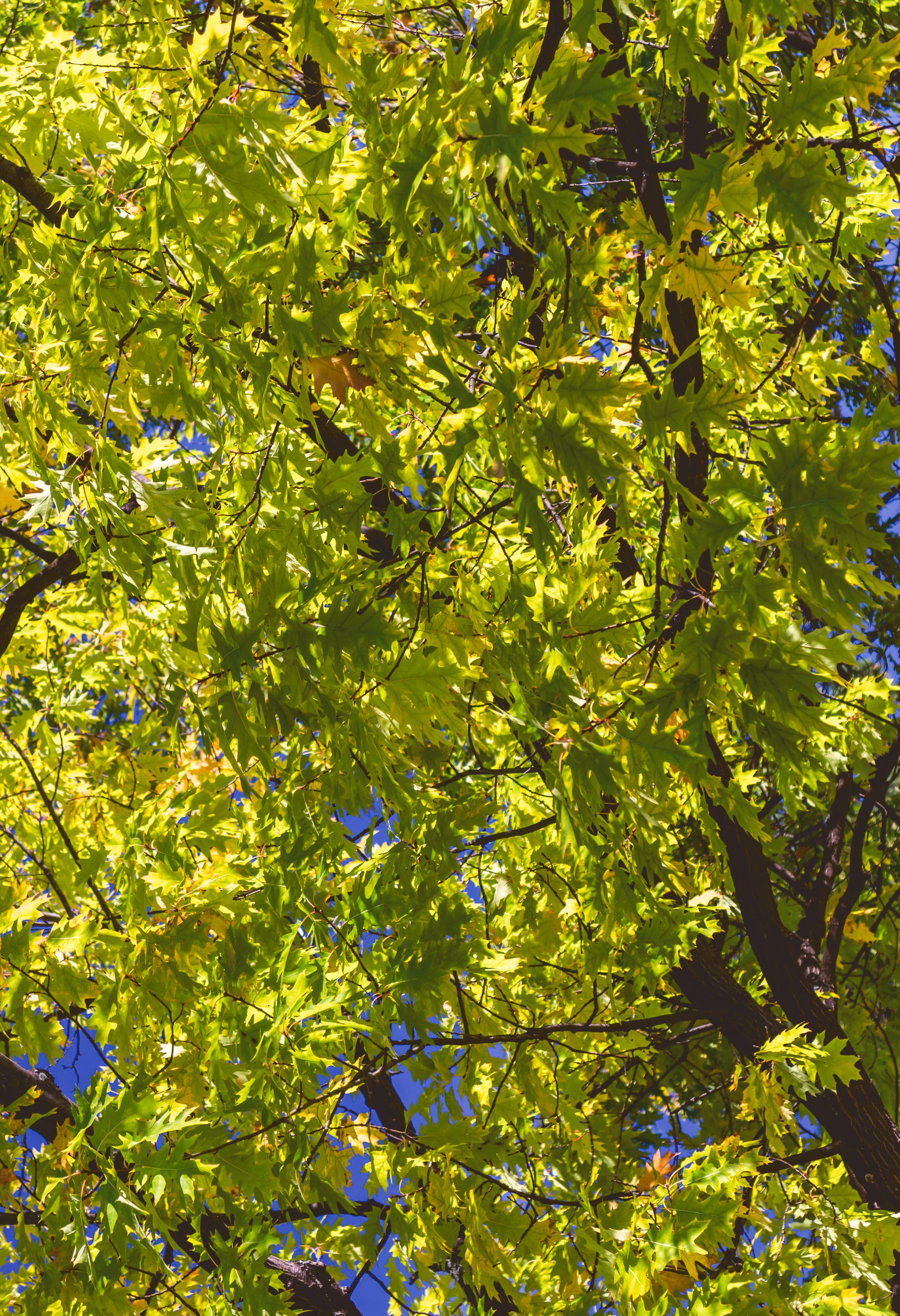 File:Fall colors Lamoureux Park Walkway (36401387342).jpg ...