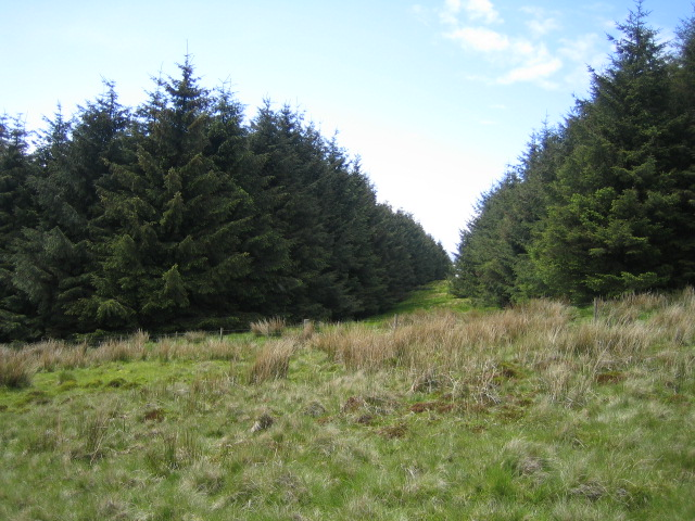Firebreak, Wholhope Hill near Wether Cairn - geograph.org.uk - 453534