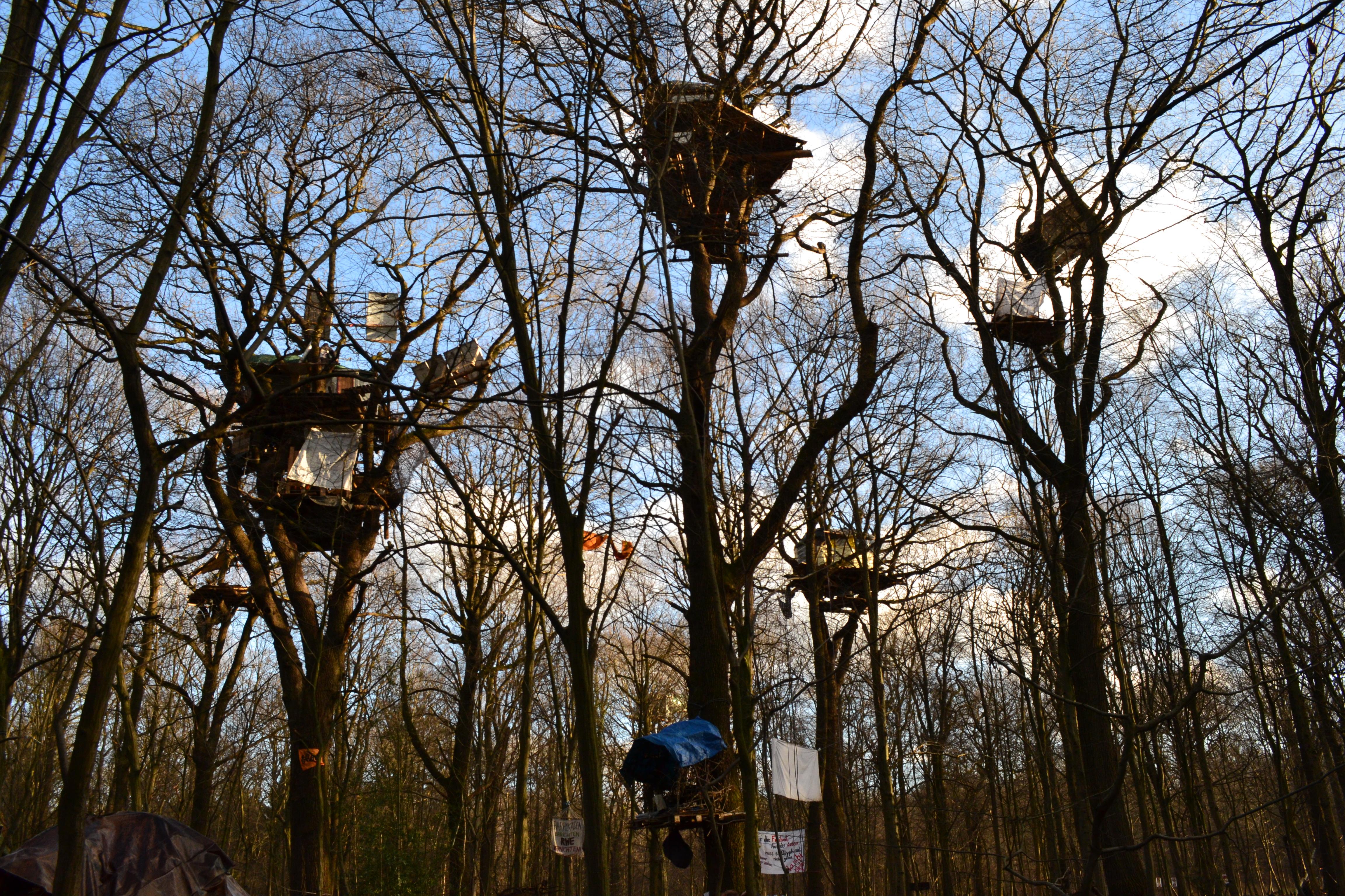 Bechsteinfledermaus Hambacher Forst