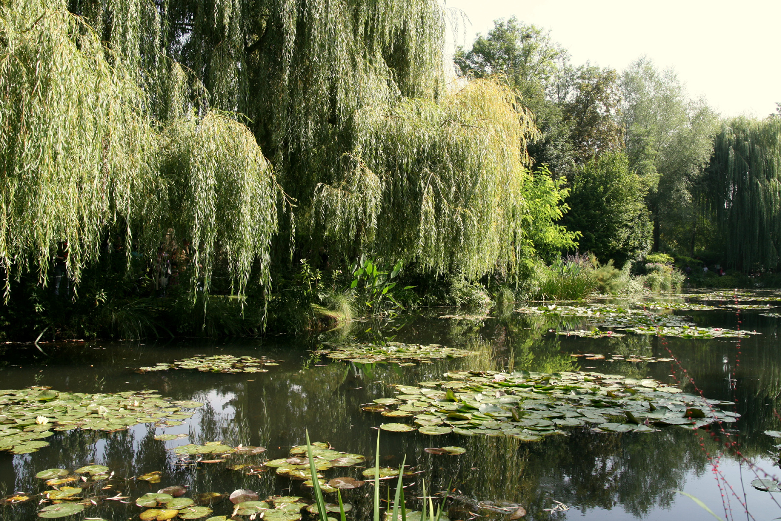 File giverny jardin monet 10 jpg for Jardines monet