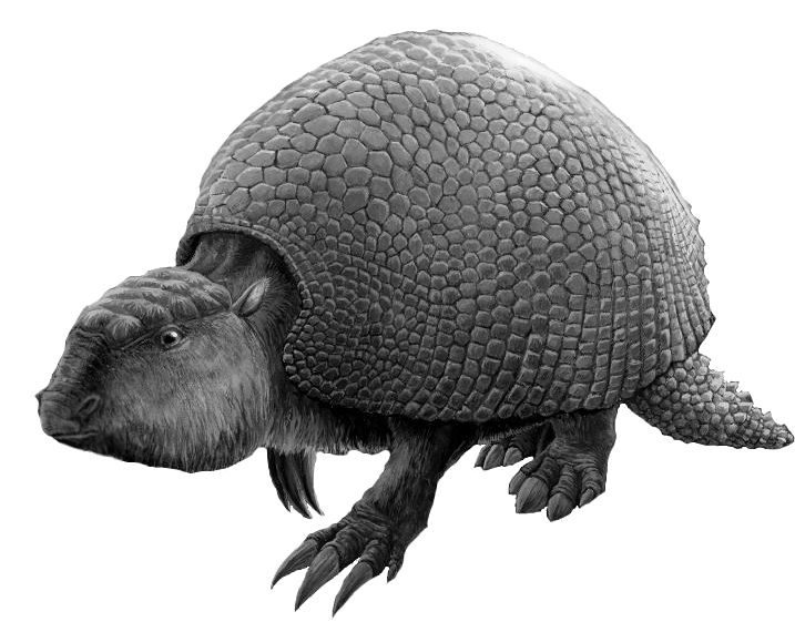 Datei Glyptodon Noir Et Blanc Edit Png Wikipedia