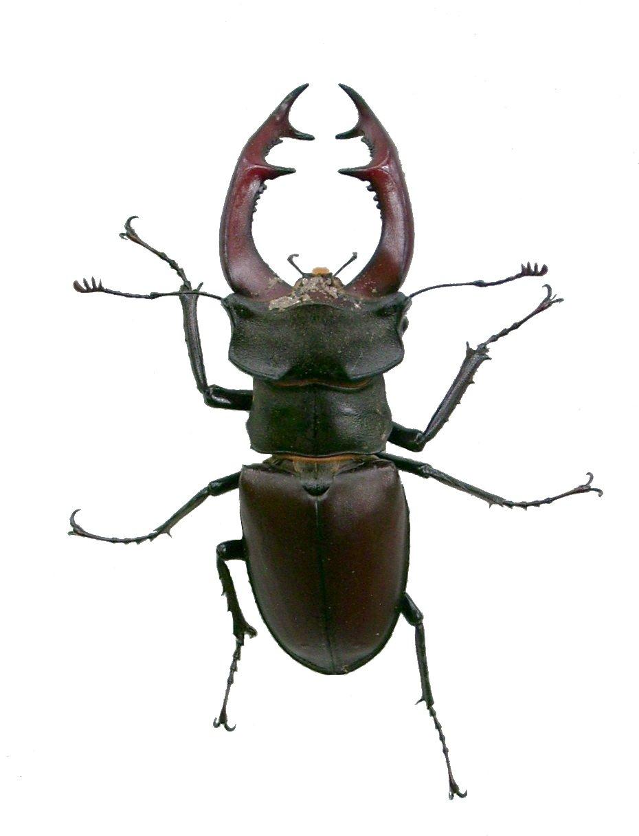 Käfer Englisch
