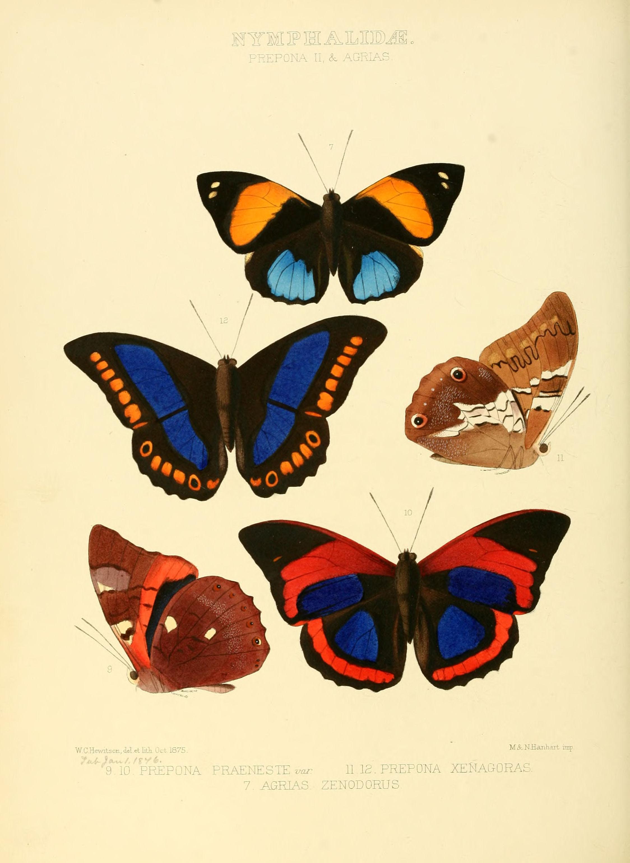 Butterfly Home By Matthew Williamson Designer Red Inlay Mirror