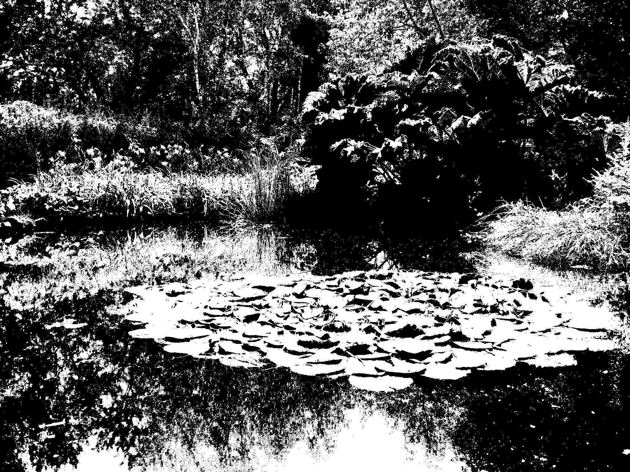 File Jardin aquatique effet lithographie JPG Wikimedia mons