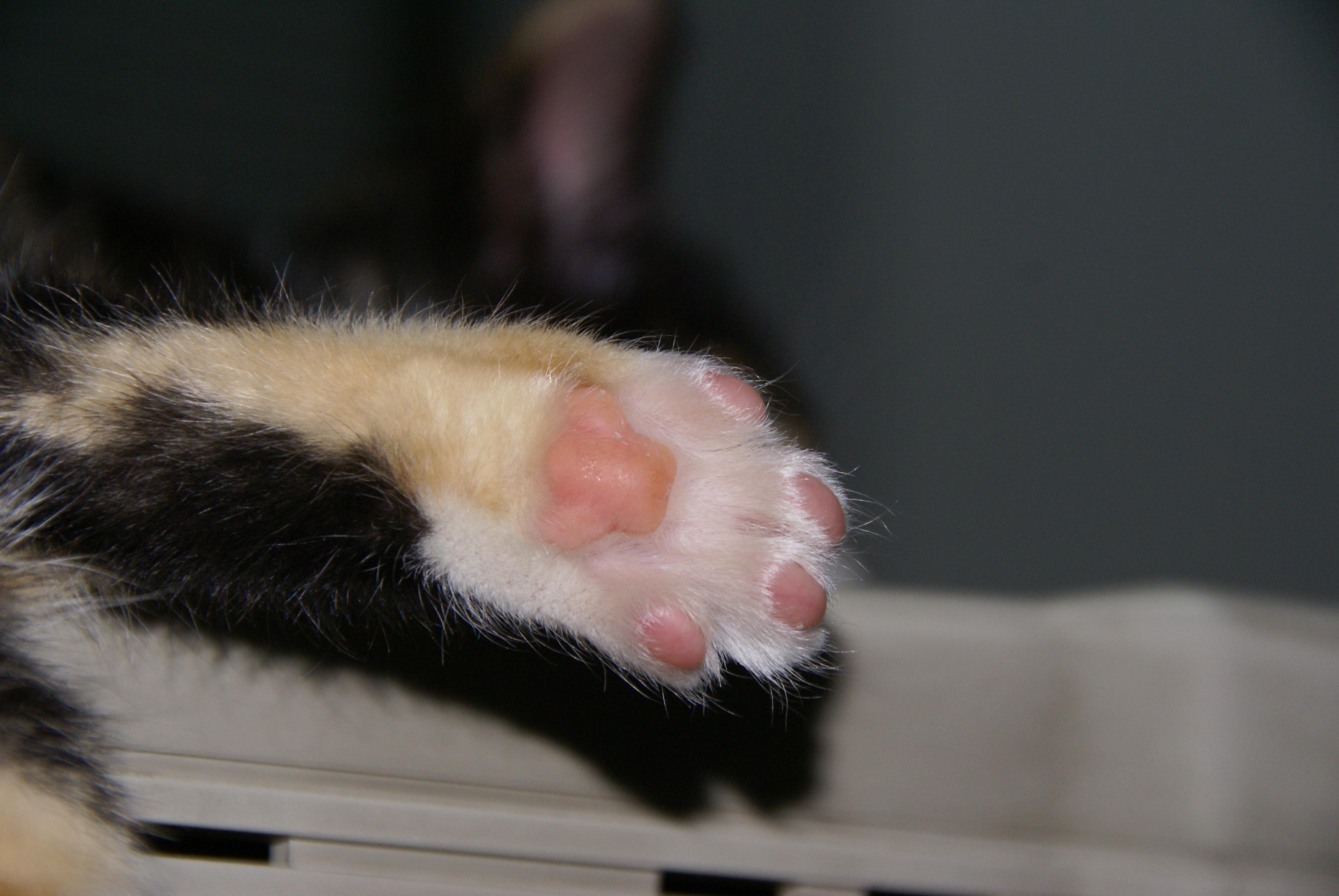 Cat S Paw Spanker