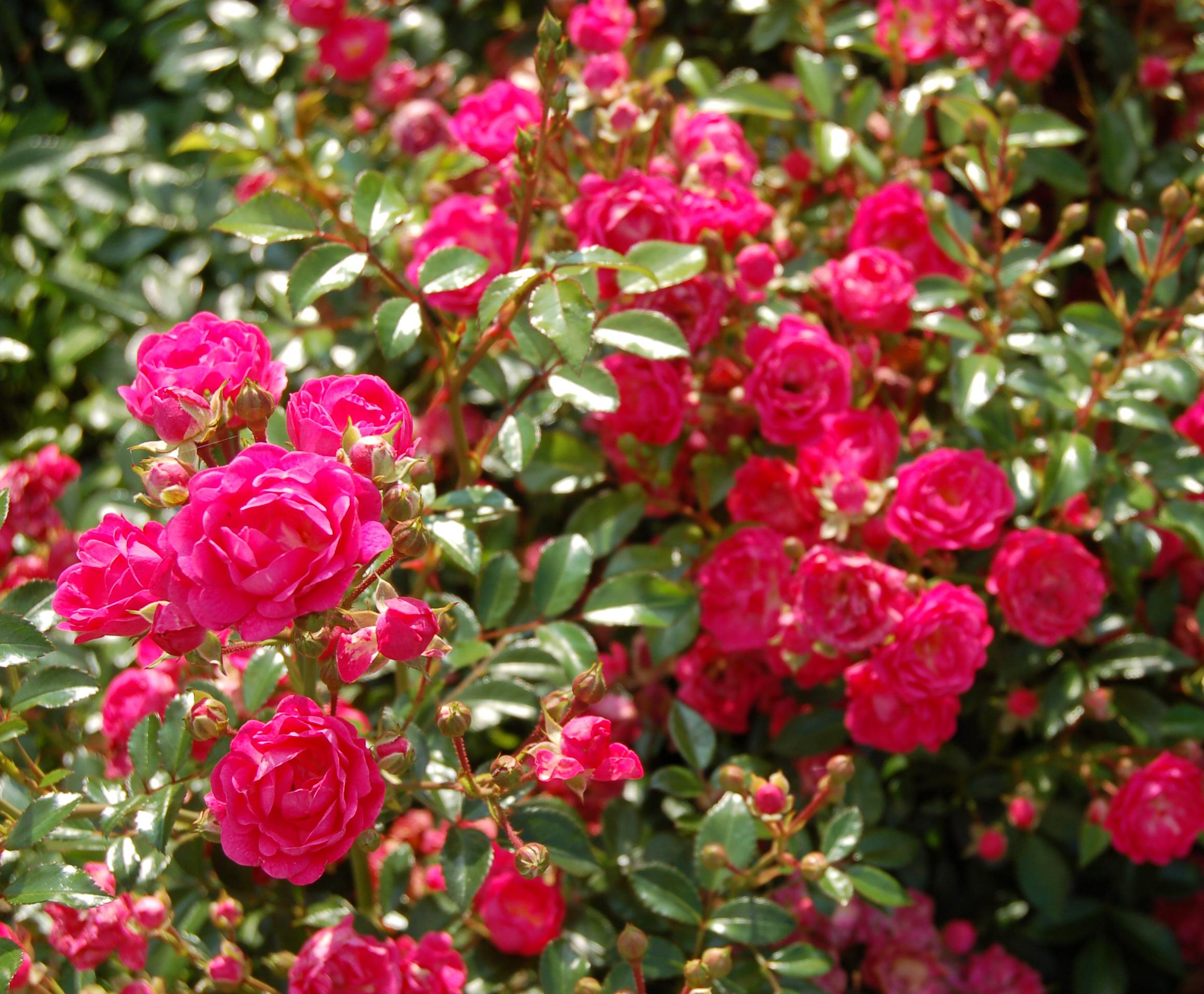 File Lovely Fairy Vurens Spek 1992 Jpg Wikimedia Commons