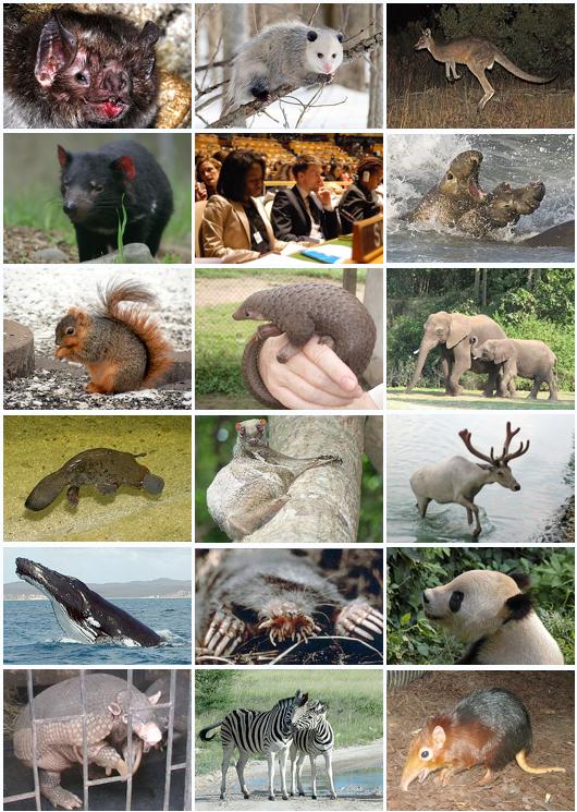 Les anges aiment le pieux! - Page 4 Mammal_Diversity_2011-less_depressing