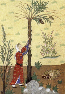 Mary shaking the palm tree for dates Maryam.jpg