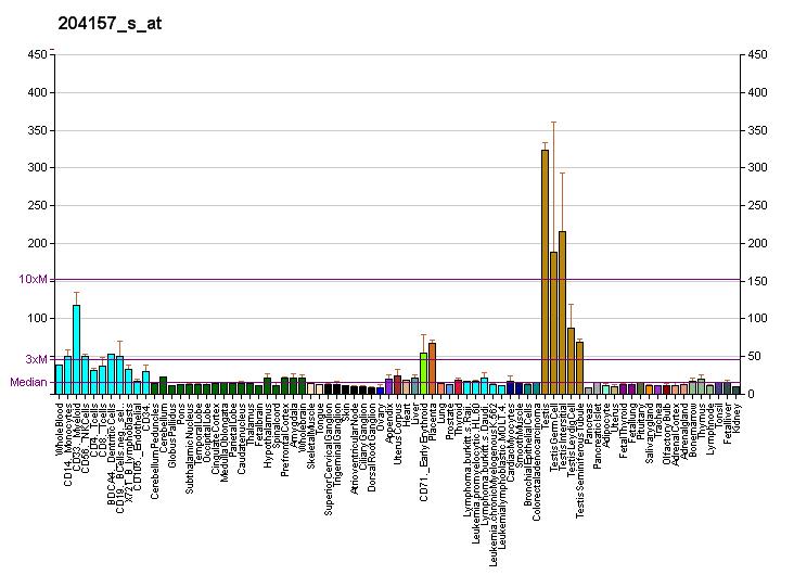 File:PBB GE KIAA0999 204157 s at fs png - Wikipedia