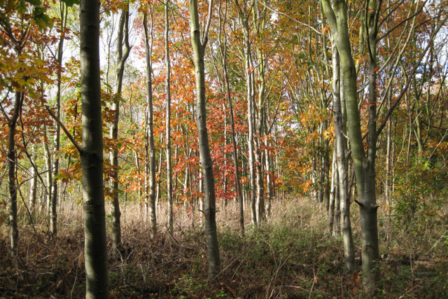 Pedley's Wood, Newbold Comyn Park, Royal Leamington Spa - geograph.org.uk - 1560696
