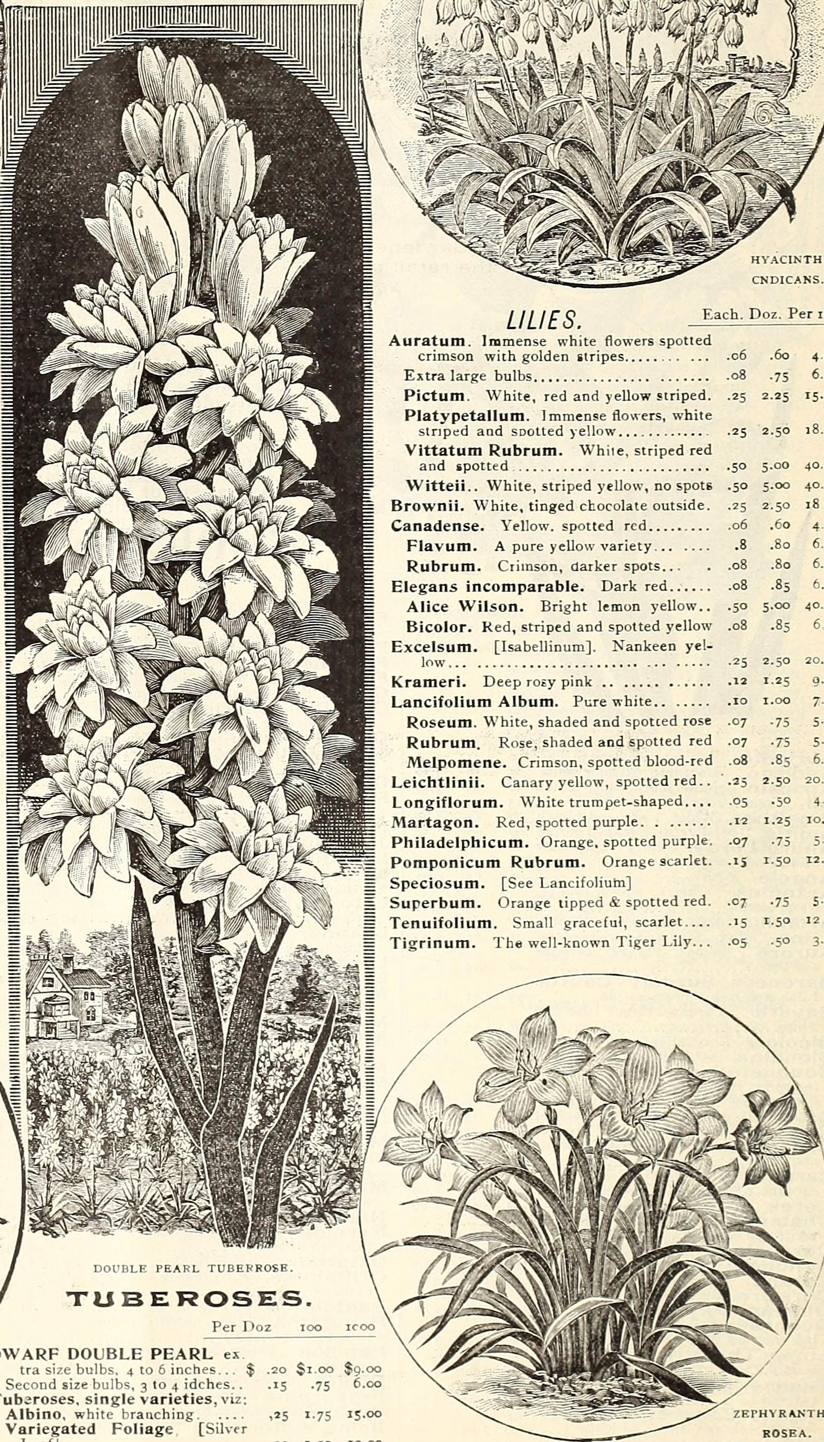 Filepeter Henderson And Cos Spring 1899 Florists And Market