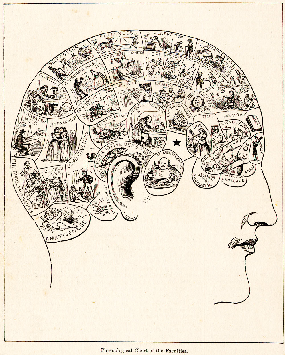 Phrenology wikipedia fandeluxe Gallery