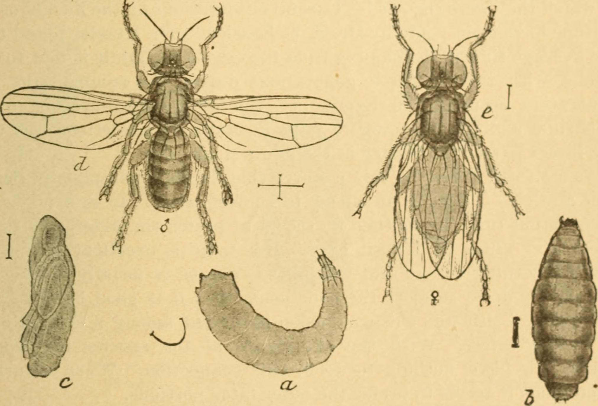 Entomology Subjects: Beneficial insects--United States Insect pests--United States Household pests--United States. Publisher: Washington : Govt. Print. Off