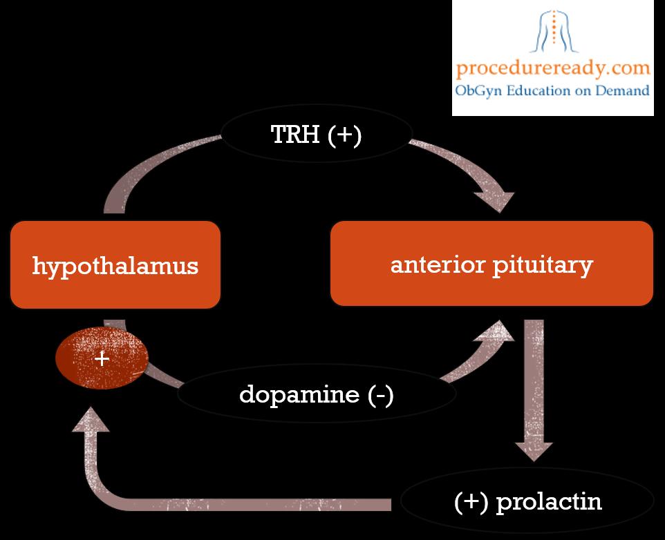 prolactin #oxygenmonitor, Skeleton
