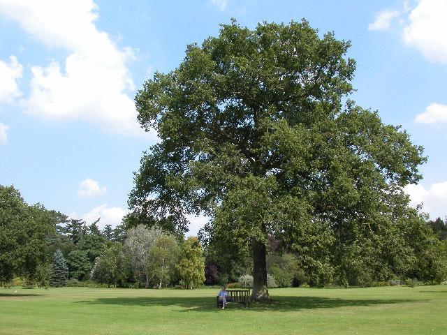 Queen Victoria's Oak Tree, Sandringham - geograph.org.uk - 44077