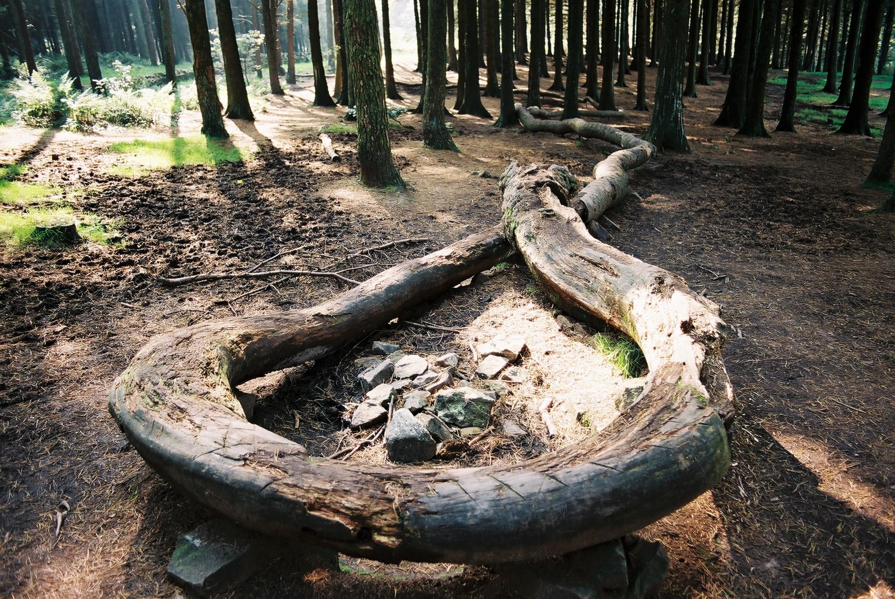 Image result for thompson dagnall snake