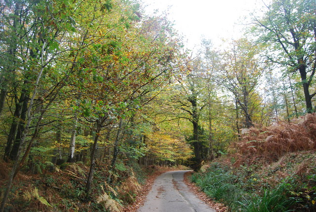 Wealdway, Five Hundred Acre Wood - geograph.org.uk - 1585003