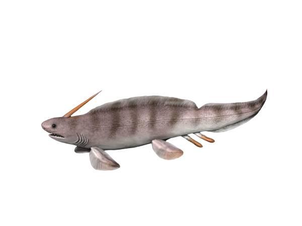 Xenacanthus - Wikipedia