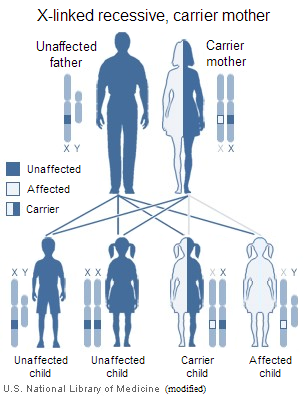 Inheritance diagram for Androgen Insensitivity Syndrome (AIS)