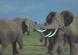 2004327 Fighting Elephants.png