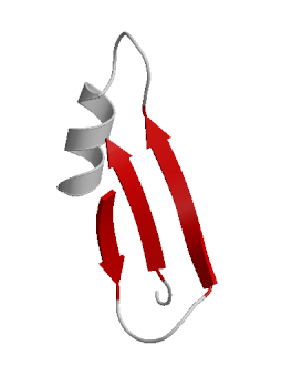 In this cartoon of a protein, the grey tubes represent loops connecting the more compact helical and ribbon (red arrow) regions of this small portion of a protein (Source: Wikimedia Commons.)