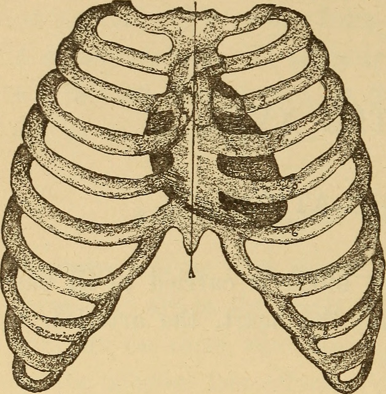File:A healthy body. A textbook on anatomy, physiology, hygiene ...