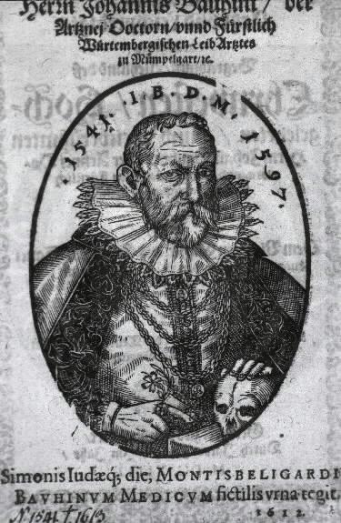 Johann Caspar Bauhin