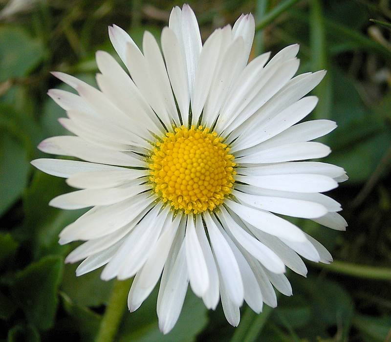 Image Result For Flowers And Plants
