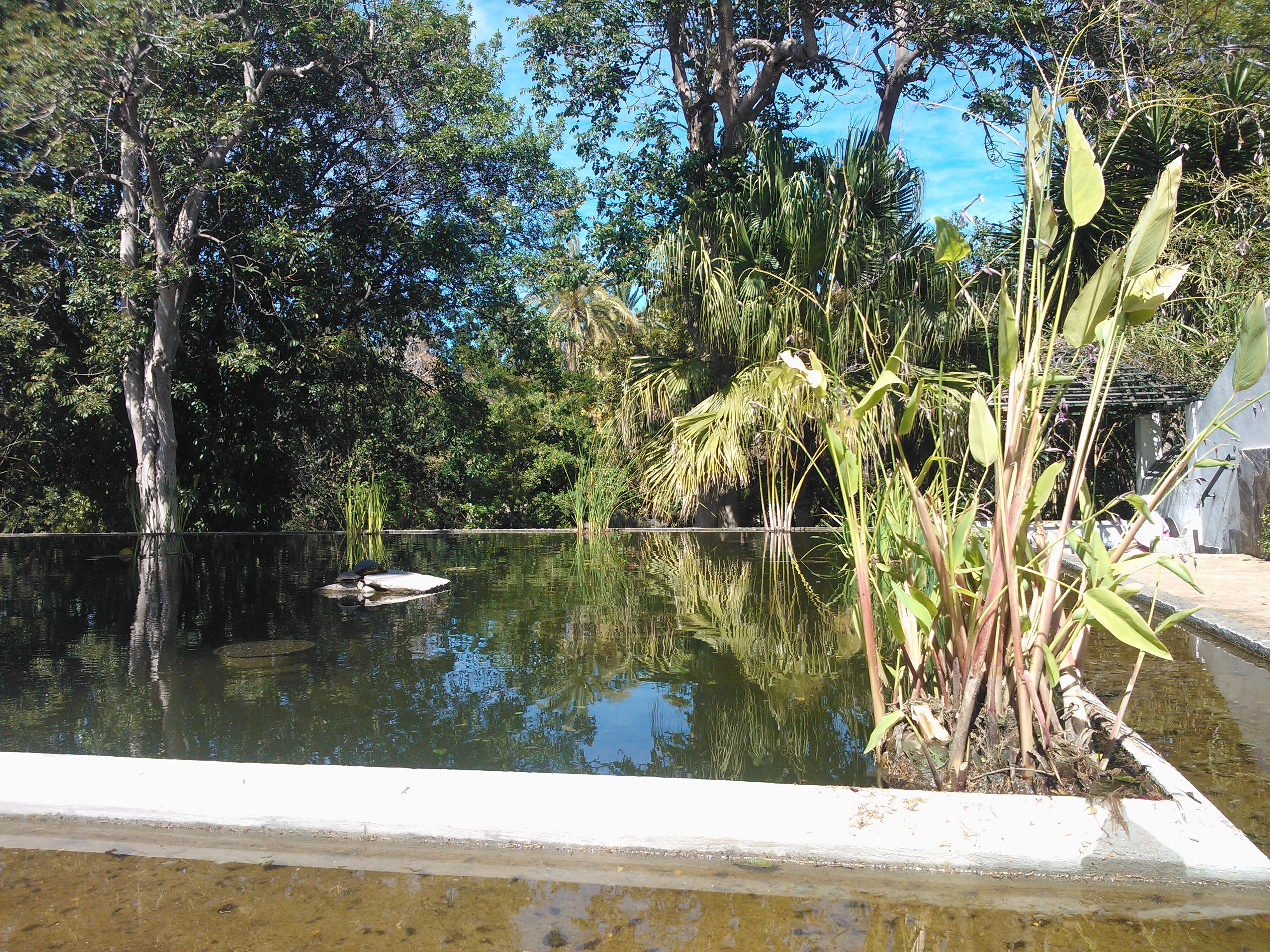 File botanical garden puerto de la cruz wikimedia commons - Botanical garden puerto de la cruz ...