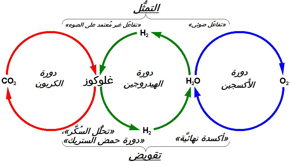 دورة الهيدروجين ويكيبيديا