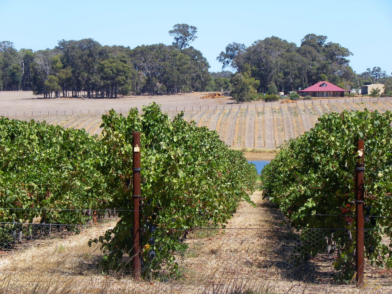 CSIRO ScienceImage 11695 Vineyard.jpg