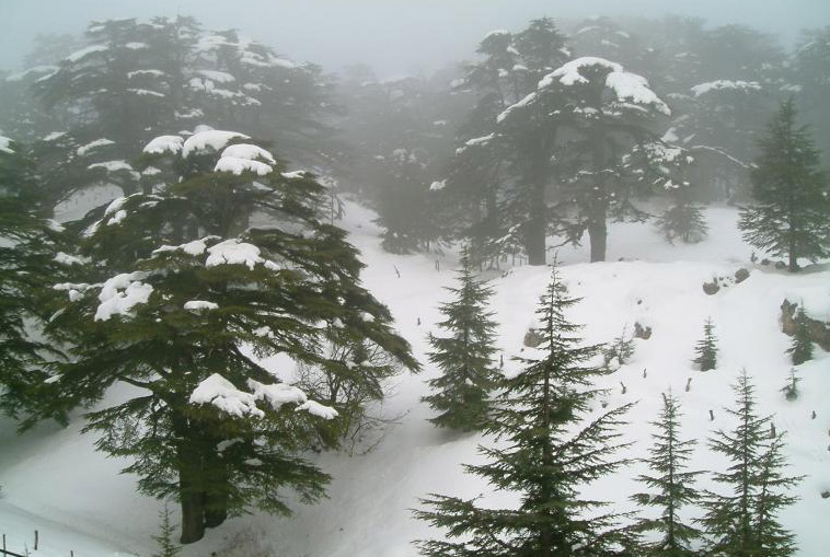 التعريف بلبنان كبلد سياحي المعلومات Cedars_under_the_snow.jpg