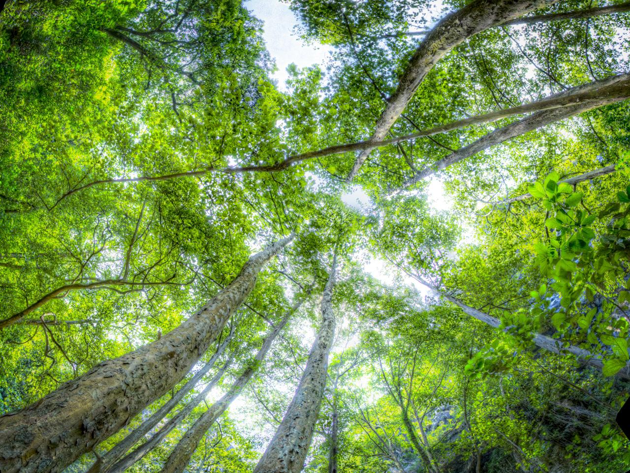 Resultado de imagen de cielo y bosque