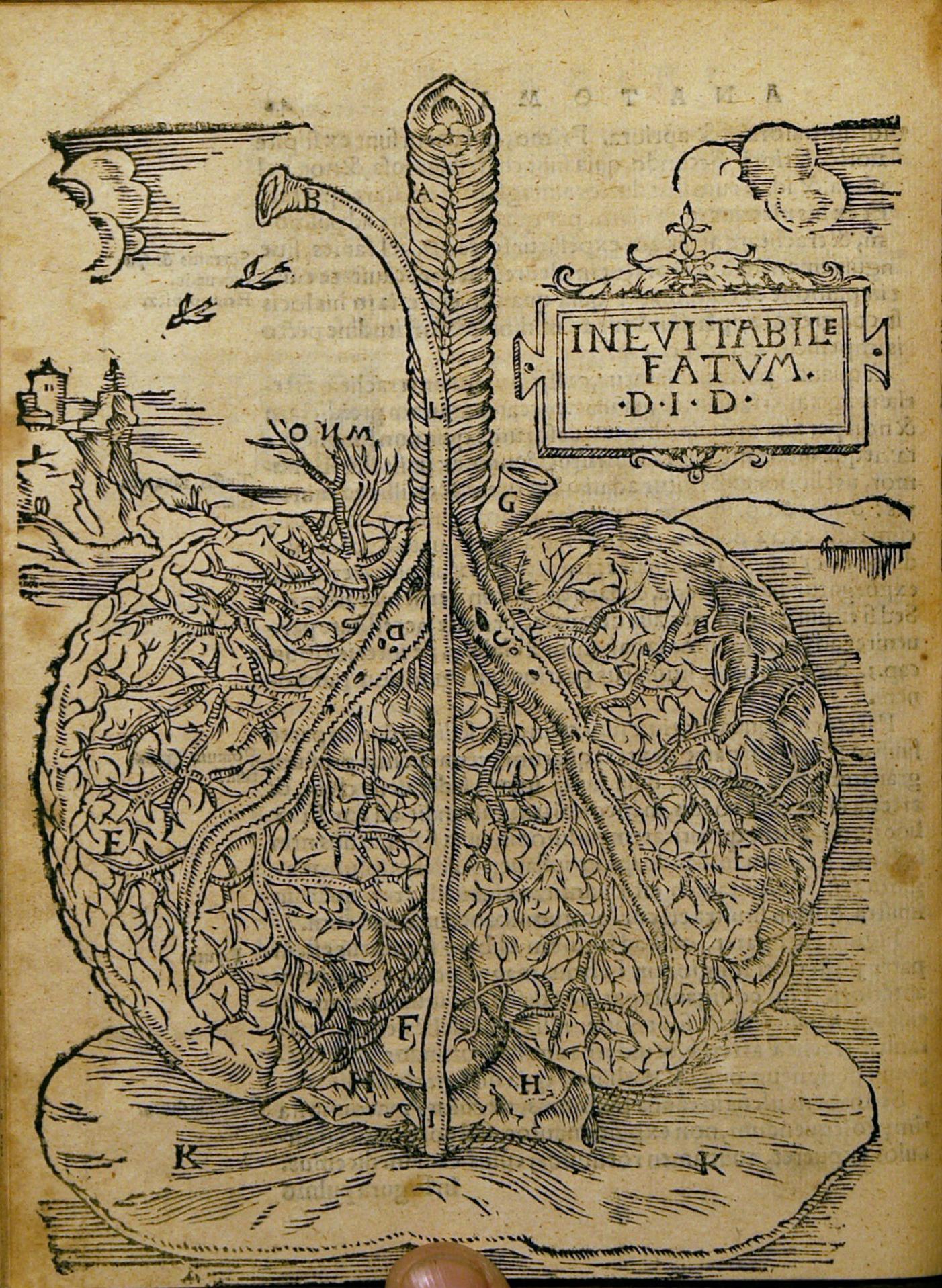 Vistoso Leonardo Da Vinci Dibujo De La Anatomía Foto - Imágenes de ...