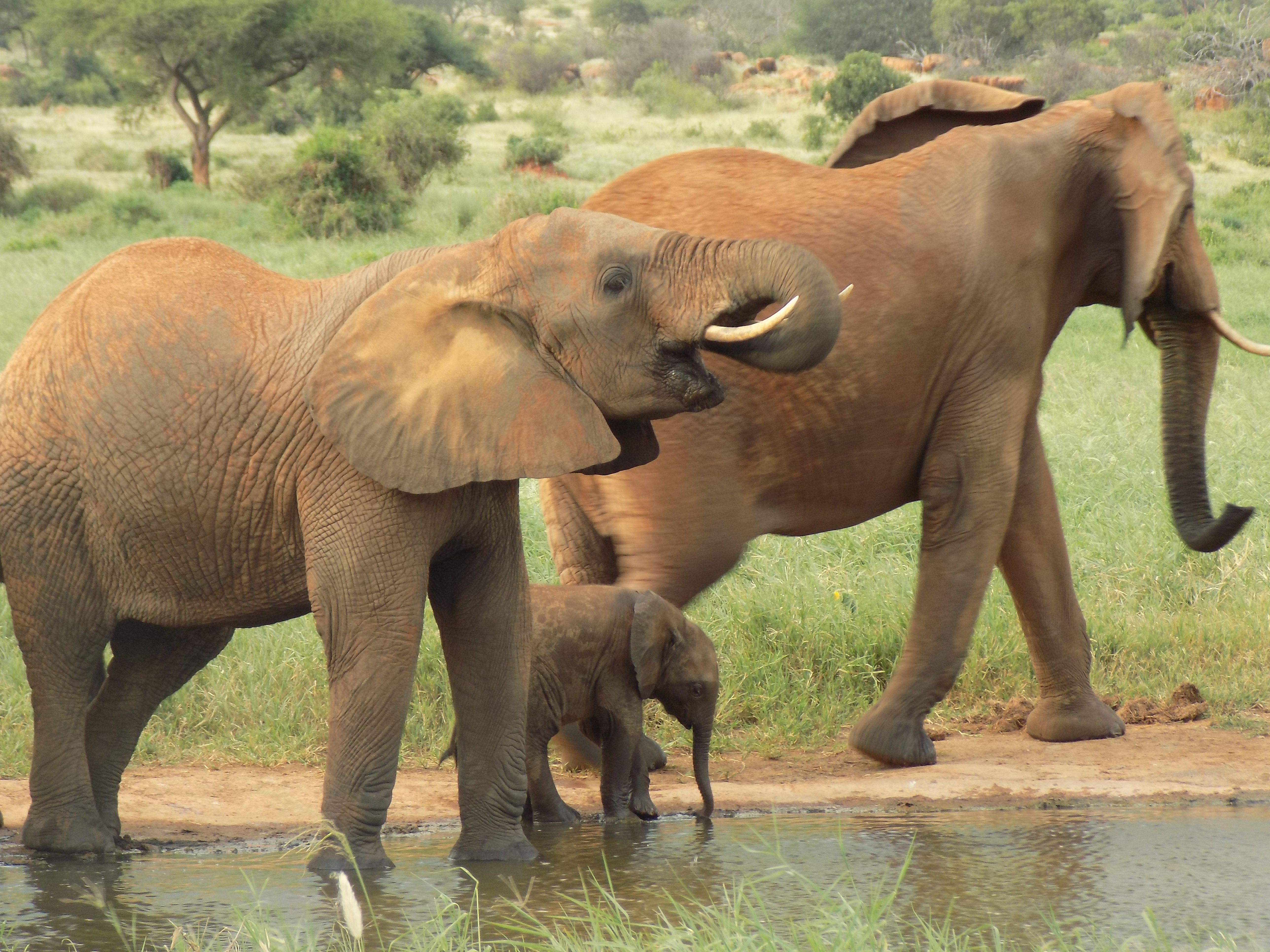 One Cool Thing: World Elephant Day