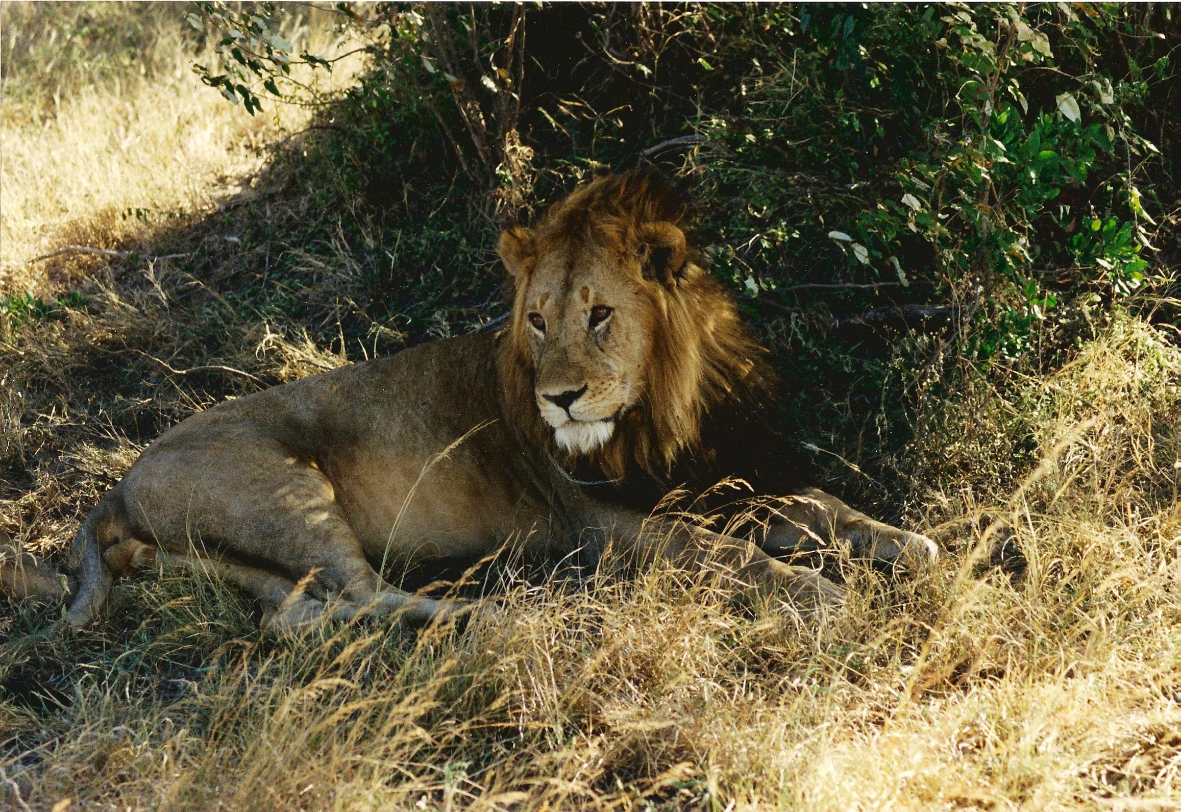 dating 50 svensk  lejon