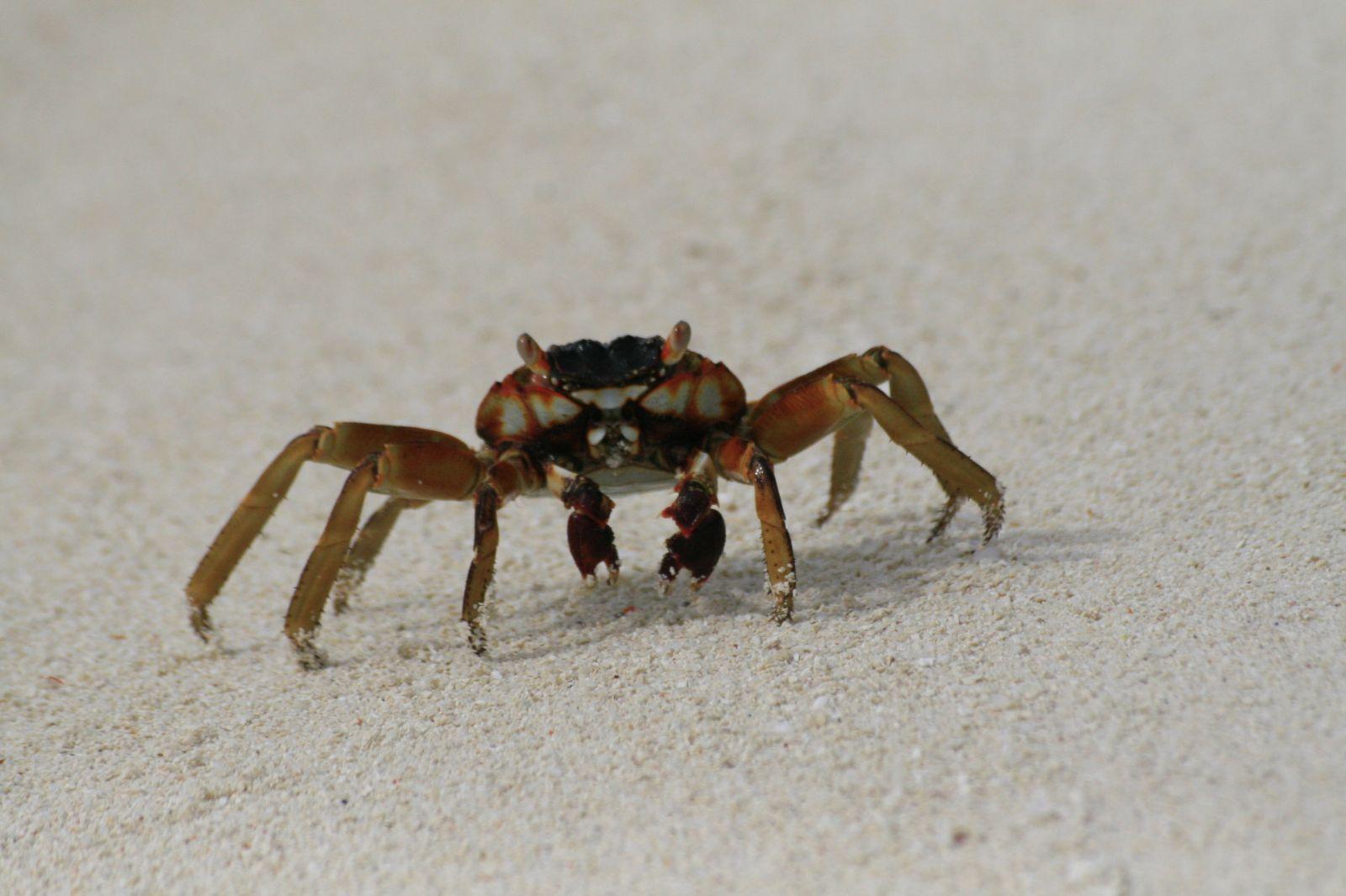 Beach Crab Resort Pangani Tansania
