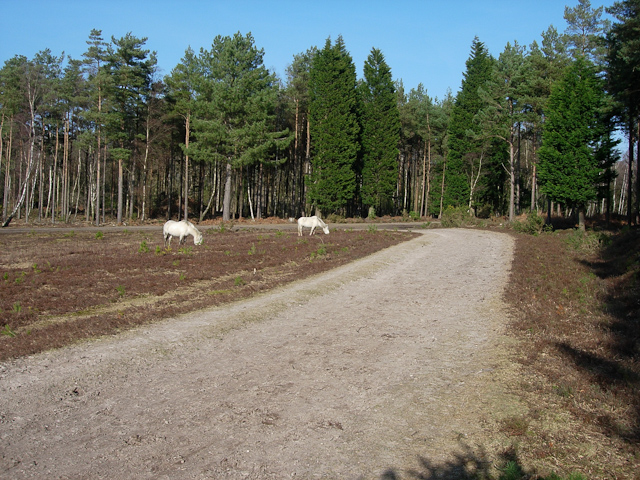 New Forest ponies - geograph.org.uk - 1306508