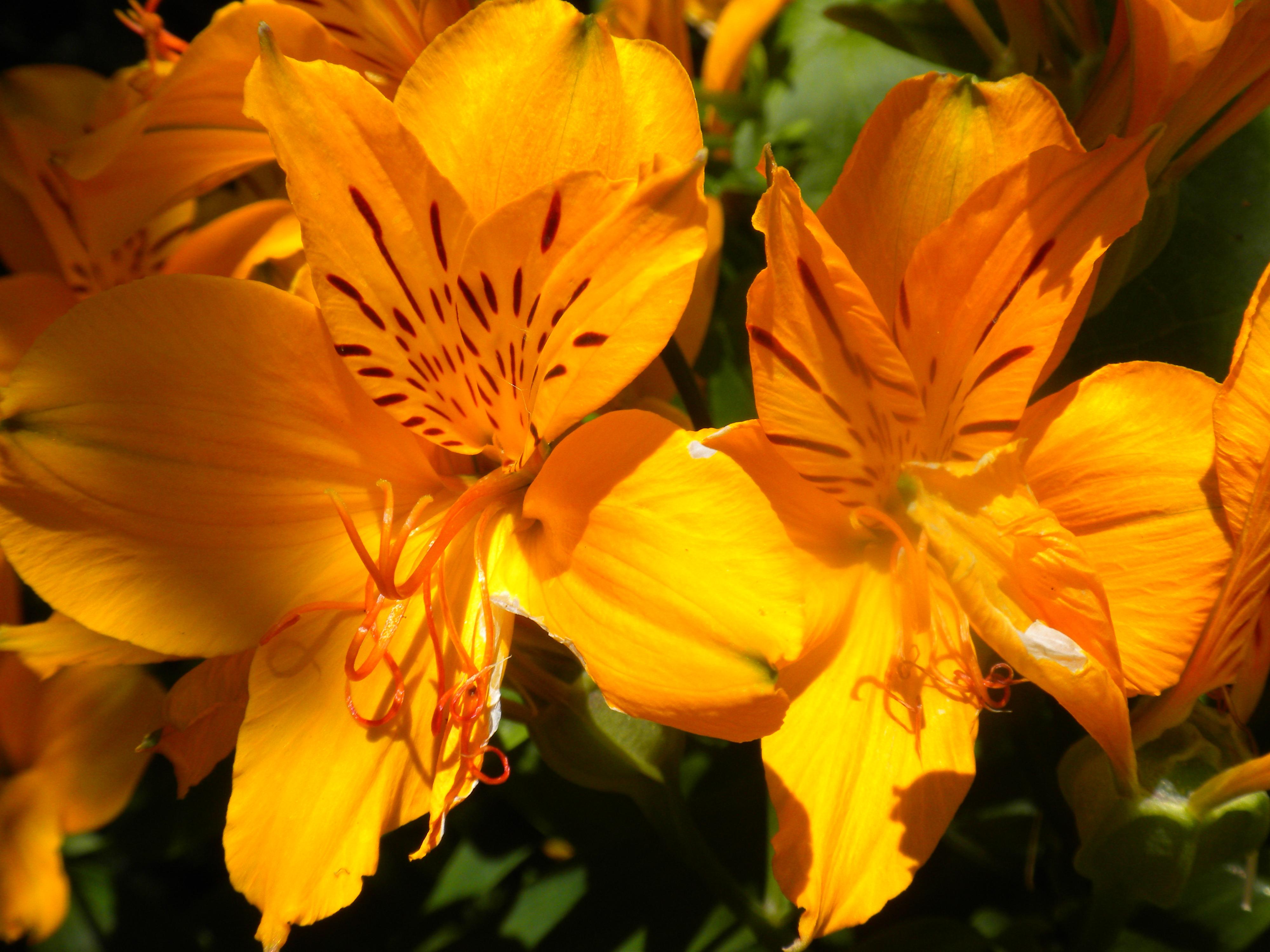 File Orange Flowers Jpg