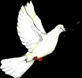 Por el Día Mundial de la Paz (21 de sept) Peace_dove