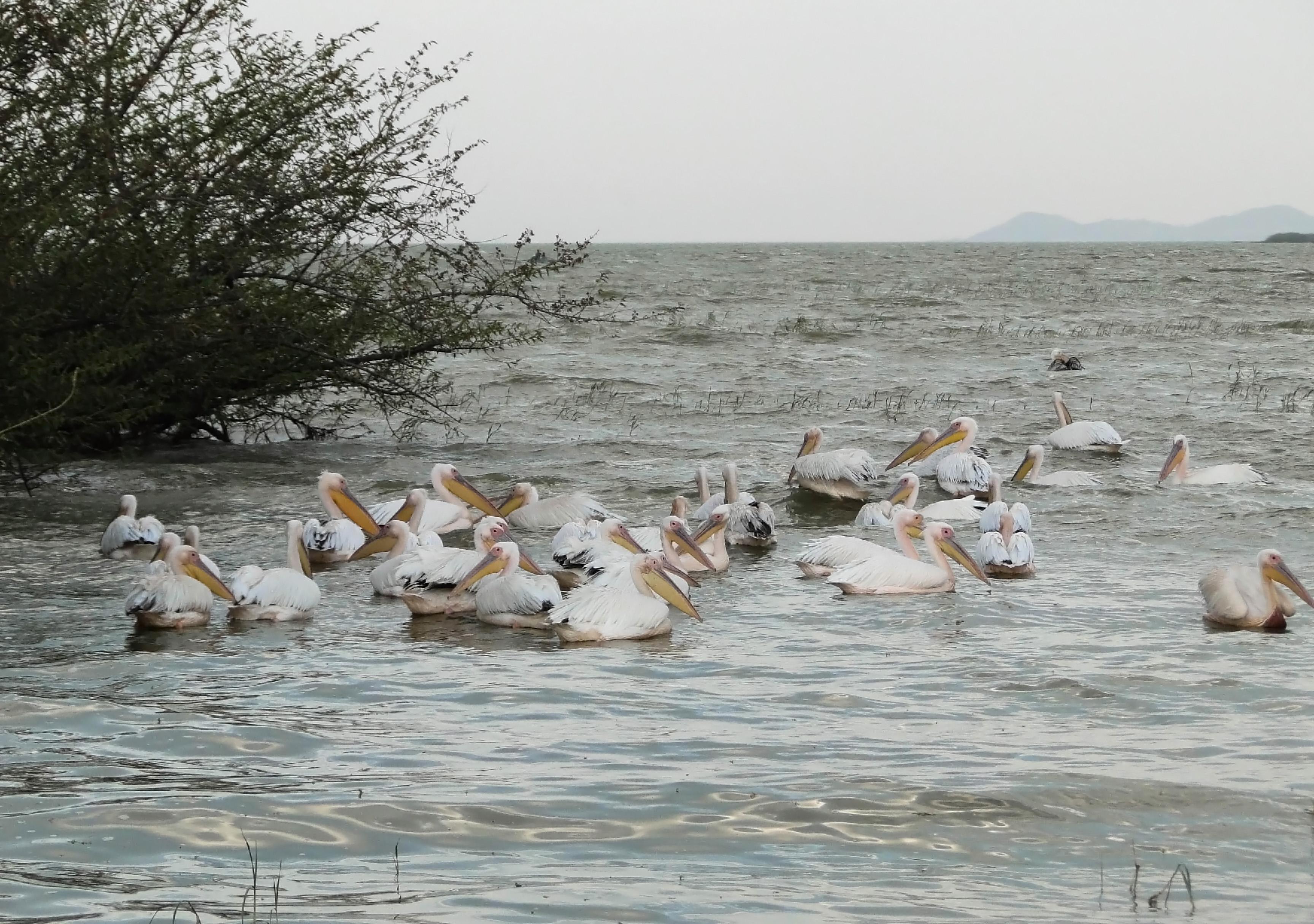 Lake Ziway - theonearmedcrab.com