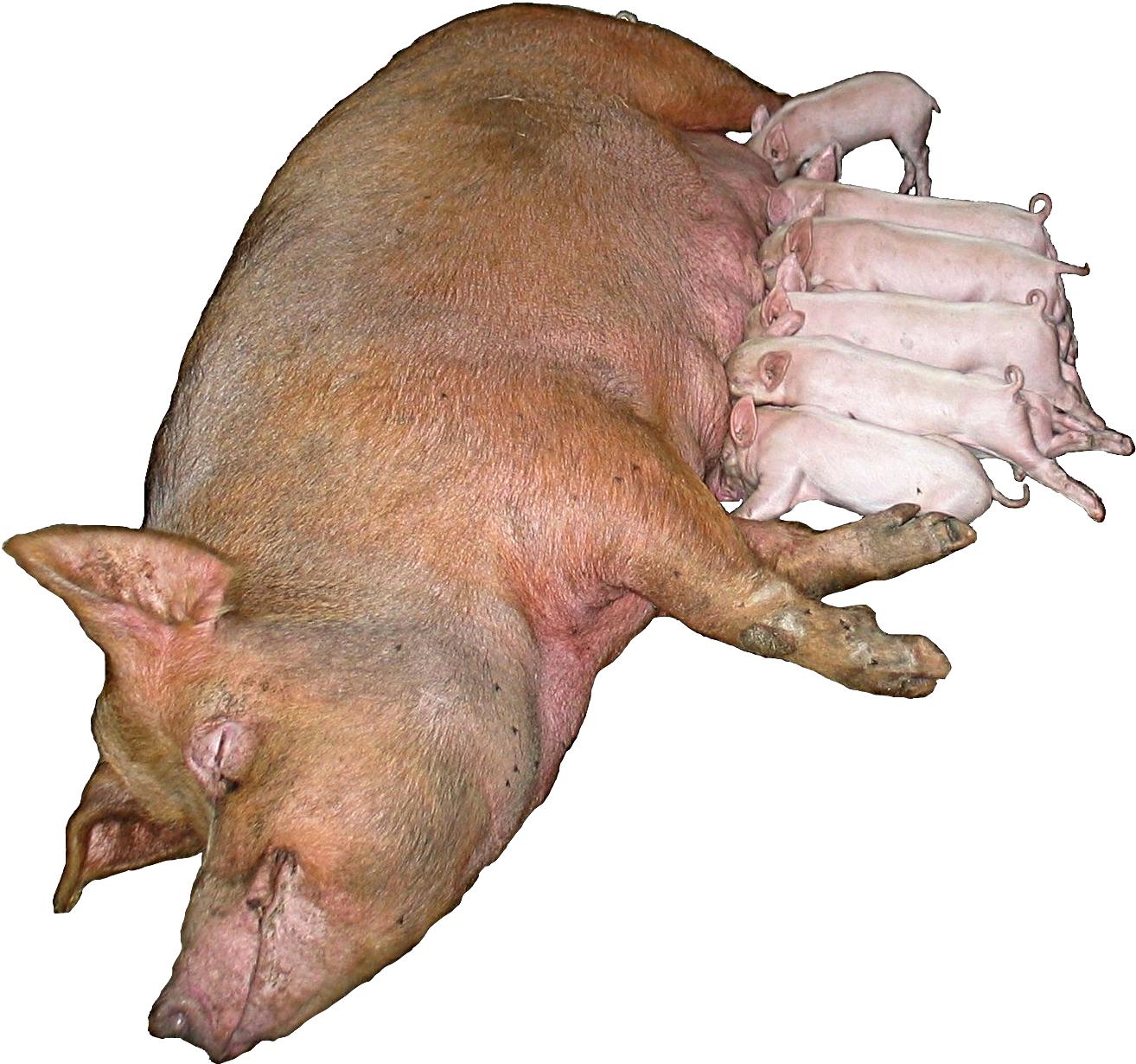 la vida de los mamiferos: