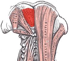Wat zijn de suboccipitale Spieren  kennis  deadreigncom