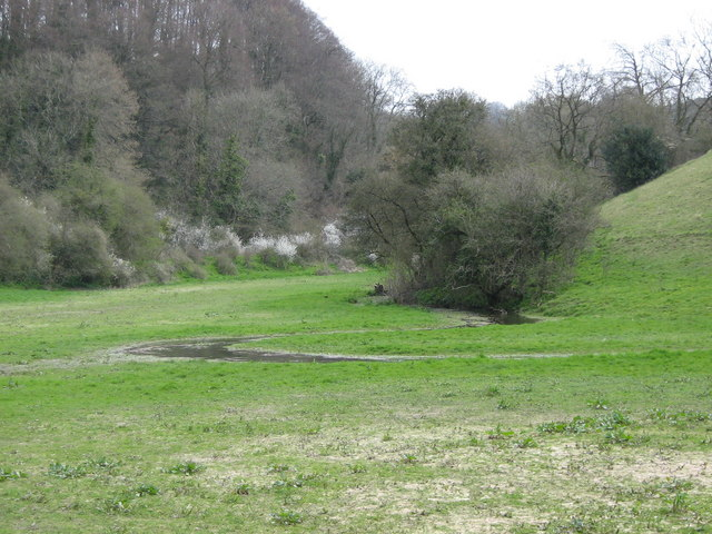 River Frome water meadows - geograph.org.uk - 398353